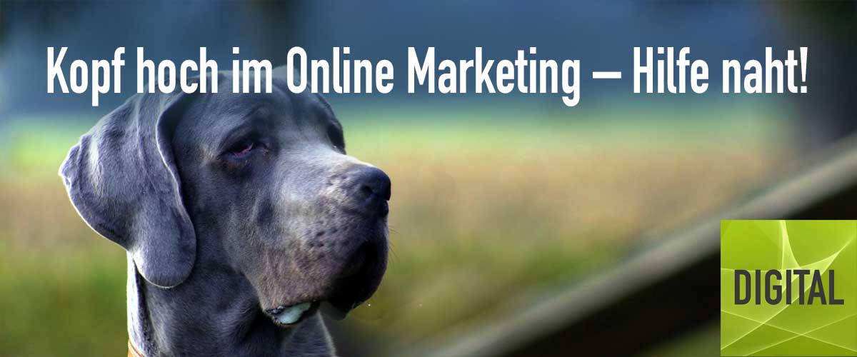 Online Marketing-Profi Maike Petersen | DIGITAL Marketing Expert
